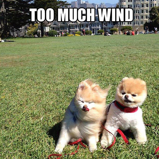 Embrace The Breeze
