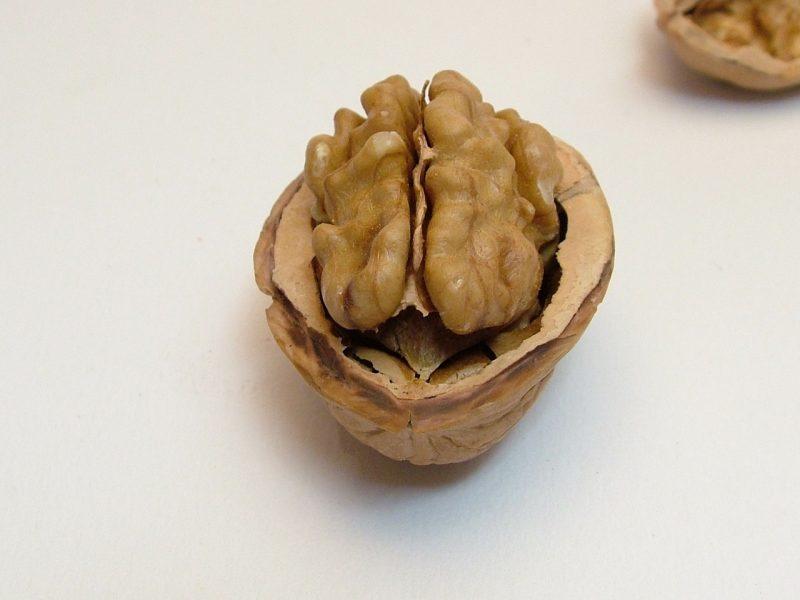 Top Brain Foods for Mental Focus
